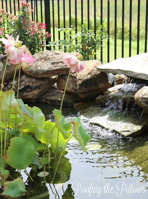 backyard pond, ponds, water features, koi pond, fish pond, water garden, waterfalls