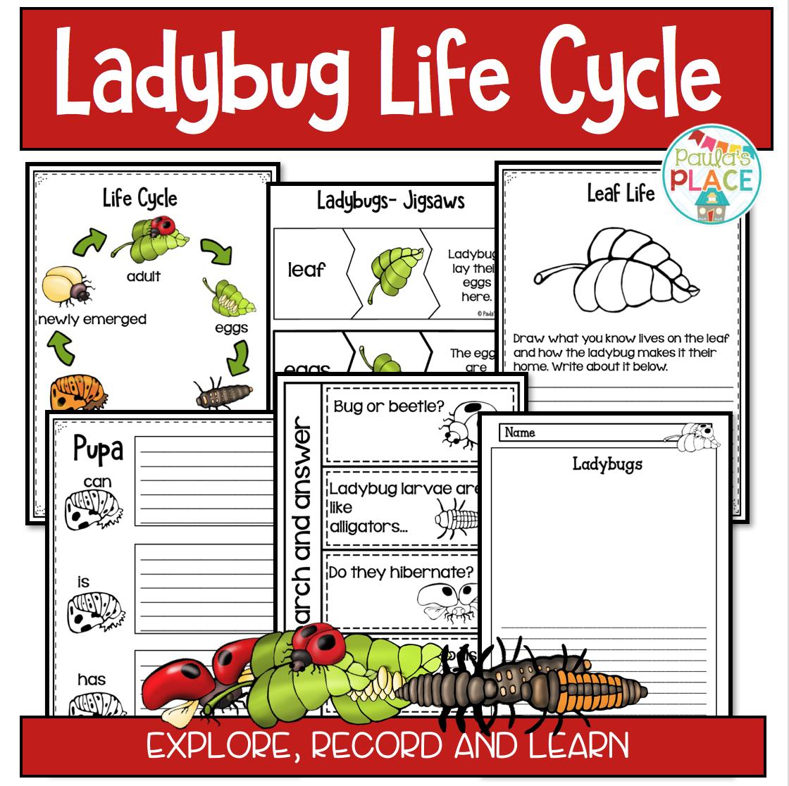 Paula S Place Teaching Resources Ladybug Life Cycles
