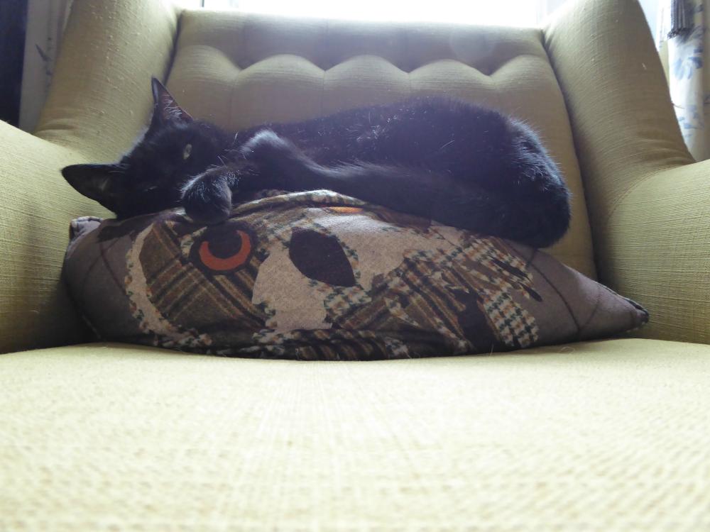 Black cat (Polly) asleep on a grumpy owl cushion