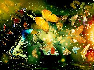 Wallpaper kupu-kupu cantik terbaru