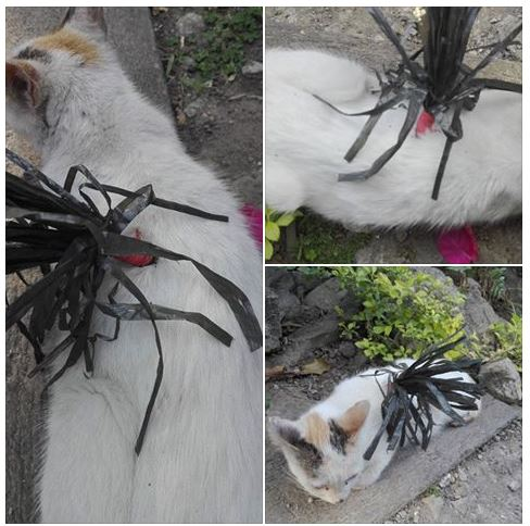 Angry Netizen Shares How Her Beloved Pet Cat Was Cruelly Killed by her Neighbors Using a Homemade Arrow!