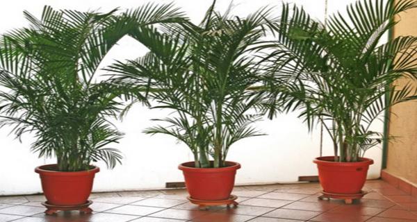 curata aerul din casa cu aceste plante