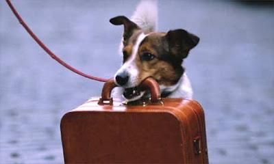 Viajando con mascotas a Londres