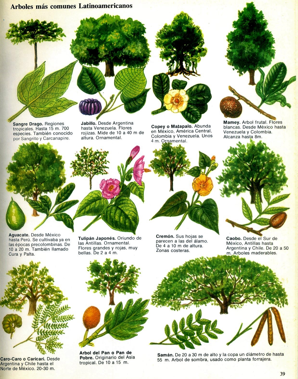 Txirpial rboles latinoamericanos for Hojas ornamentales con sus nombres