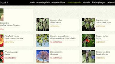 Arbolapp: la aplicación para identificar árboles lanza su web y añade 25 especies