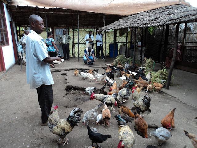 Image result for jinsi ya kufuga kuku
