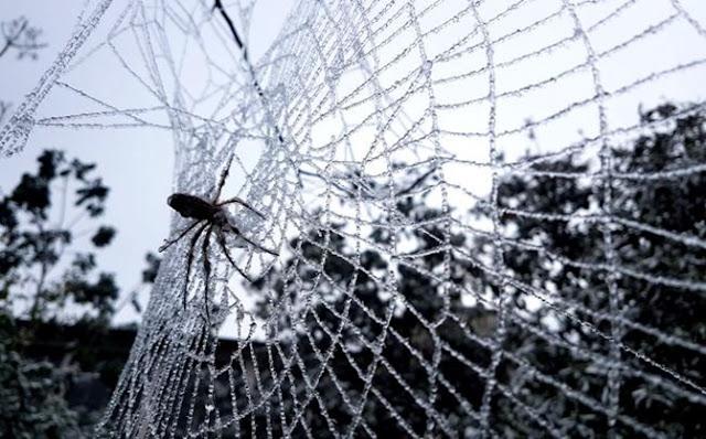 Insectos, plagas, insecticida