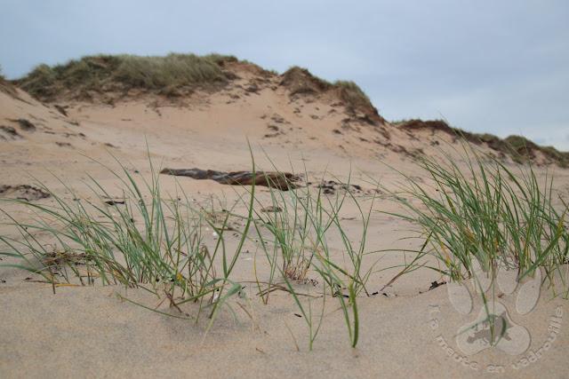 Suede-Halland-reserve-gullbranna-och-tonnersa-dunes-sable