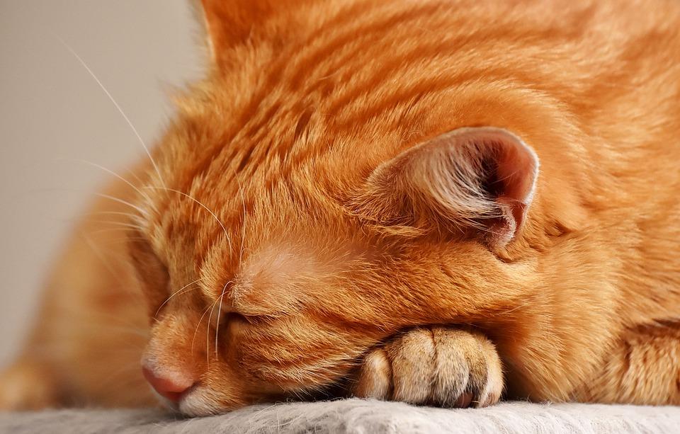 Resultado de imagen para gato anciano
