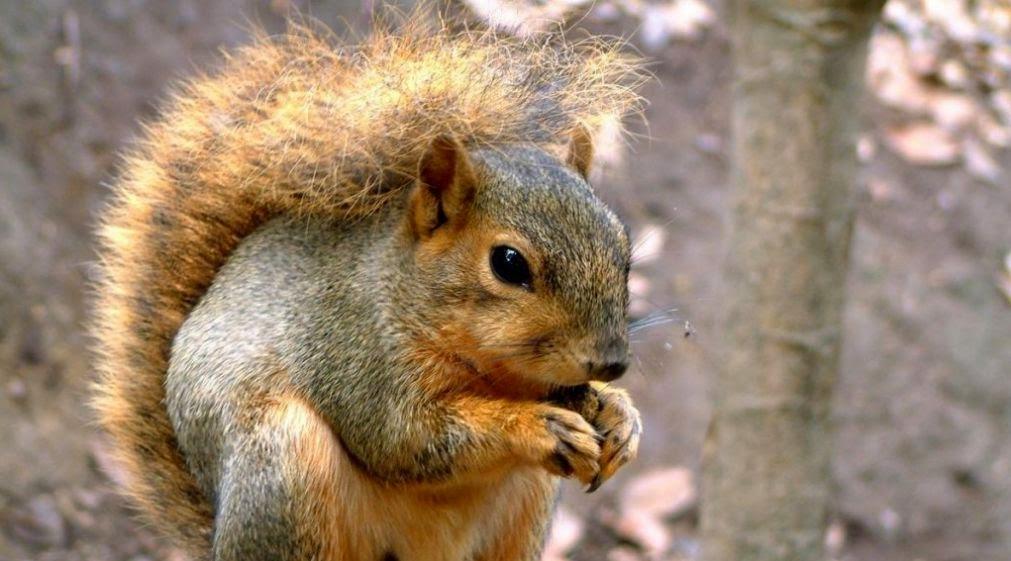 Las ardillas y biologia de los ecosistemas