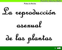 http://cplosangeles.juntaextremadura.net/web/edilim/tercer_ciclo/cmedio/las_plantas/la_reproduccion_asexual_plantas/la_reproduccion_asexual_plantas.html