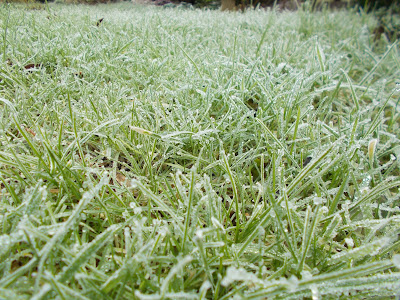 Grass Lawn Love your garden in winter Evergreens Green Fingered Blog