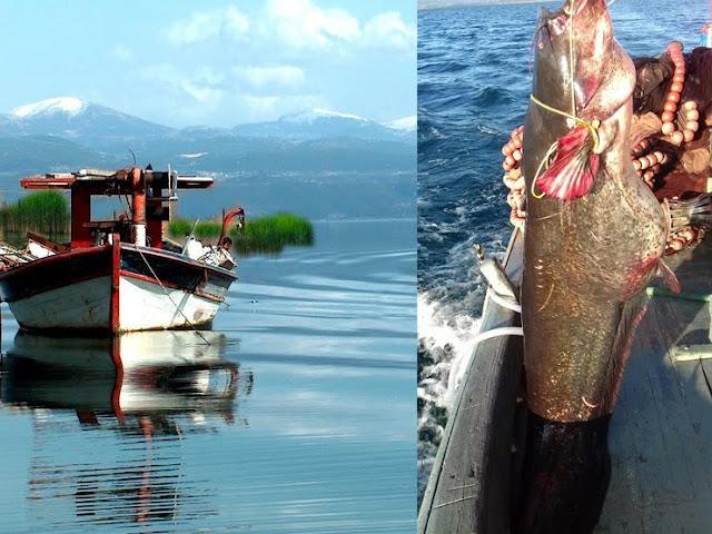 Έπιασαν γουλιανό 85 κιλών στην λίμνη Τριχωνίδα!