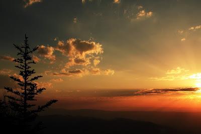 Wass Albert, Fenyő a hegytetőn, vers, vers-szombat