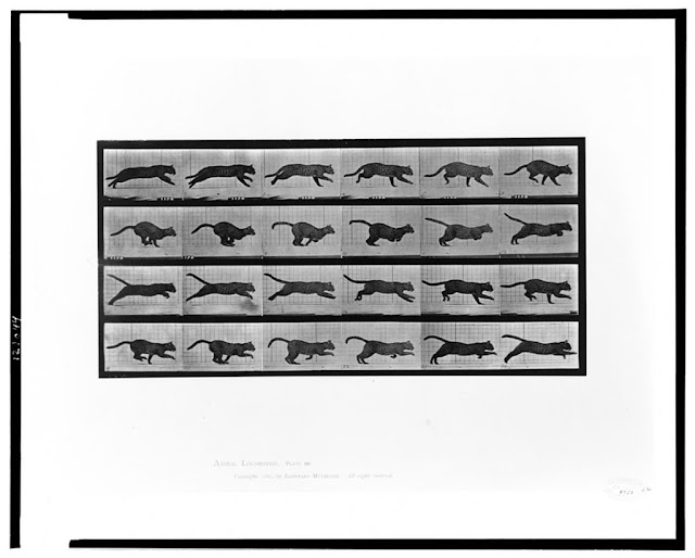 24 consecutive images a cat running. Eadweard Muybridge, 1887. From Animal Locomotion.