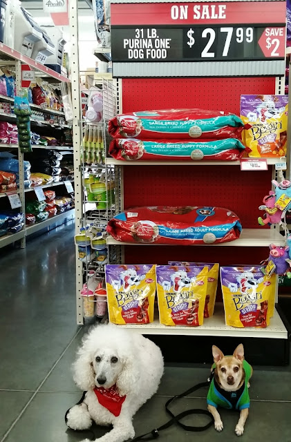 Carma Poodale and Scooby in front of #Purina display at #TractorSupply