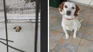 Σώθηκε το σκυλάκι στην Λήμνο που το είχαν αφήσει δεμένο μέσα στο χιόνι
