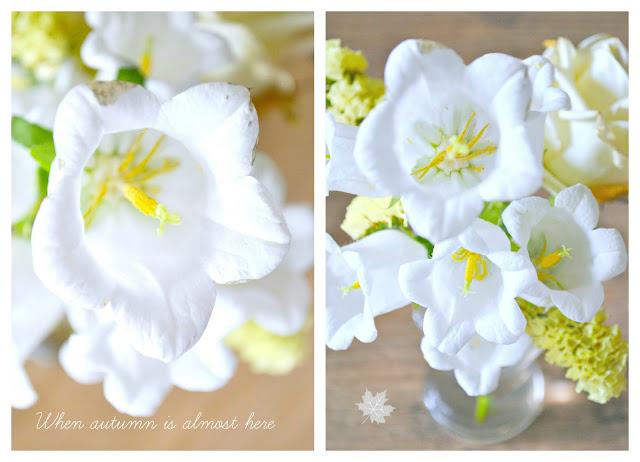kwiaty biel