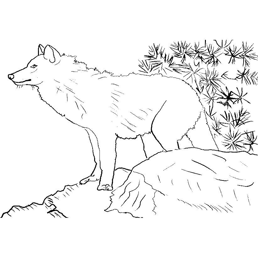 Desenhos De Lobos Para Imprimir