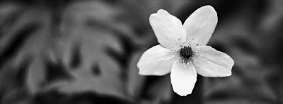 black white flower cover 18 700x259 - كفرات وأغلفة فيس بوك 2018