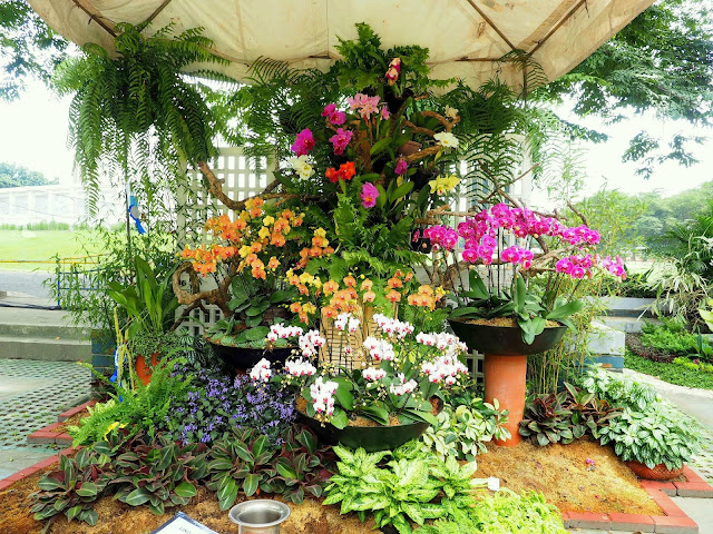Andrea in this lifetime for Landscaping plants in the philippines