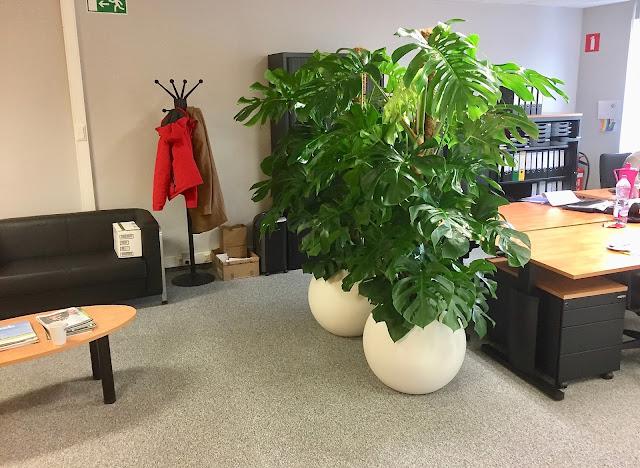planten huren voor kantoor of bedrijf Antwerpen Gent Limburg Brussel Vlaams-brabant