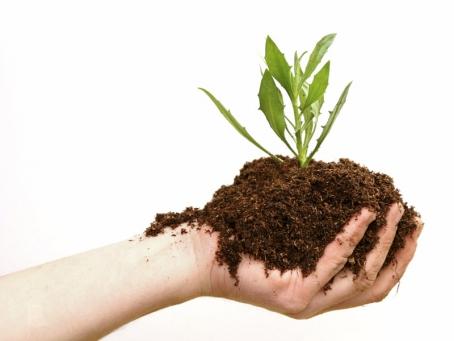 All About Farm Sekilas Tentang Pertanian
