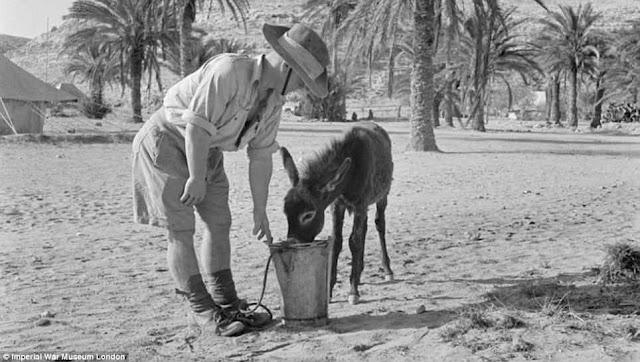 Australian soldier at Tobruk, 13 August 1941 worldwartwo.filminspector.com