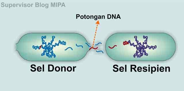 reproduksi atau perkembangbiakan bakteri secara paraseksual melalui  transformasi