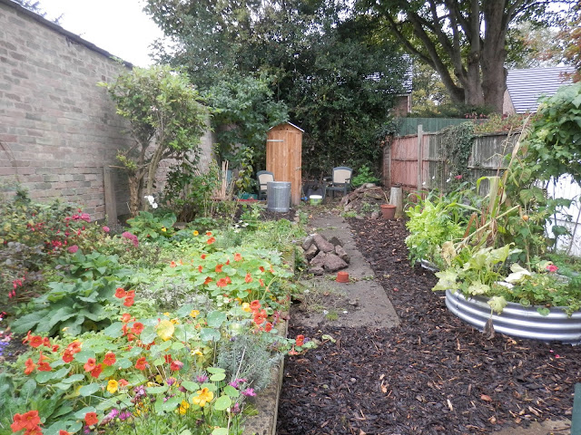 Diary of a suburban edible garden, September 2017. From UK garden blogger secondhandsusie.blogspot.com #permaculturegarden #ukpermaculture #suburbangarden #ediblegarden #sheetmulching #raisedbeds