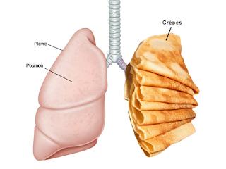 la plèvre des poumons