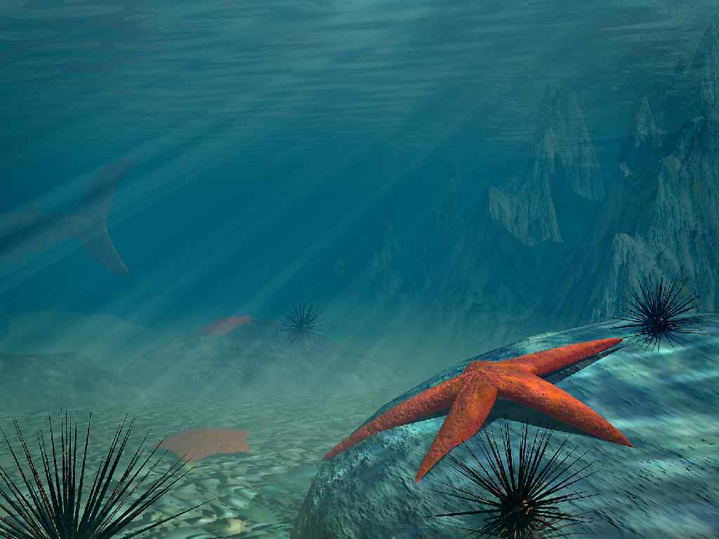 The Charmed Life: A Starfish Tale...