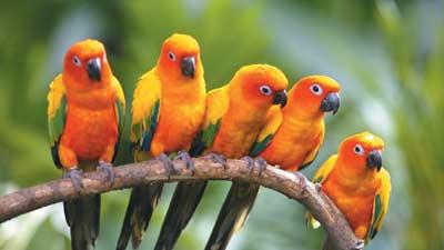 Tips, Kiat, dan Panduan Merawat Burung Piaraan