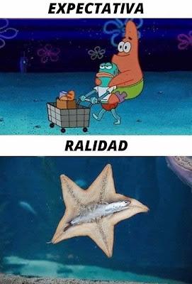 Expectativa vs Realidad: estrella de mar
