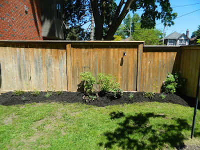 Leaside new side garden bed installation after by Paul Jung Gardening Services
