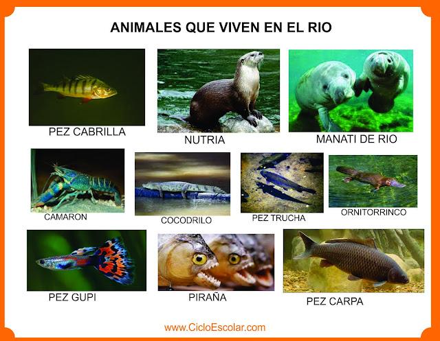 Ejemplo de animales que viven en los ríos.