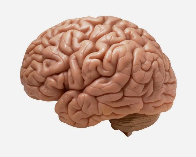 Penyebab dan obat herbal syaraf otak