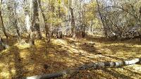 Роща поселок винный Астраханская область