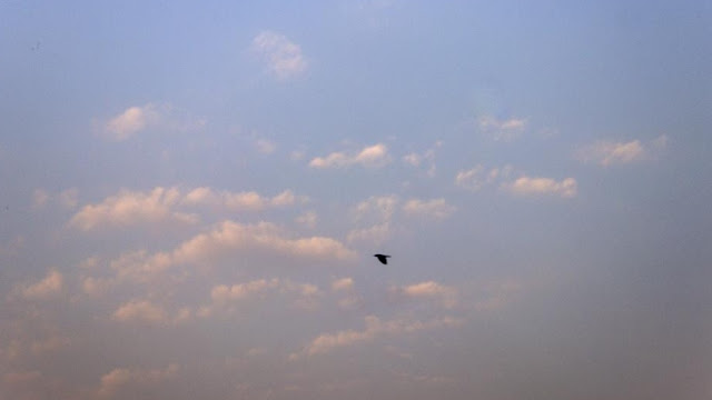 skywatch, sky, blue, bandra, clouds, bird, morning, dawn, mumbai, india,