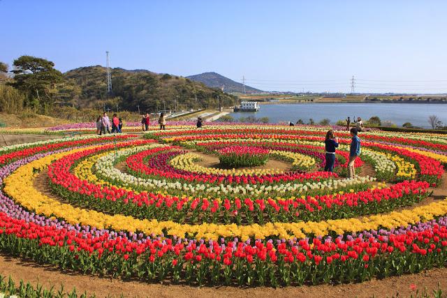 Umroh Plus Turki Tulip garden