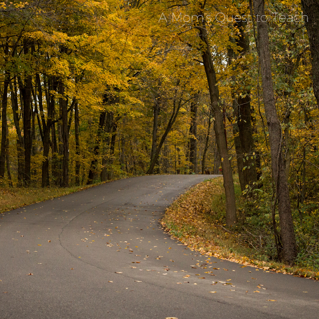 winding road through a fall forest