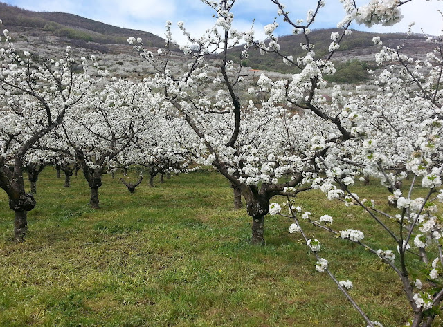 Viajar a Extremadura Jerte