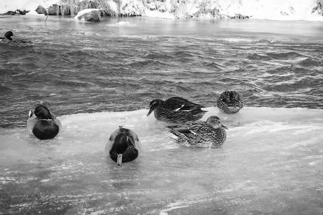 Congelado en blanco y negro - Sandra Zambrano