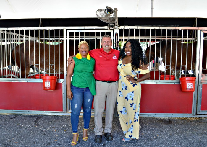 Budweiser Clydesdales Jacksonville