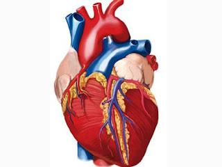 inima umana