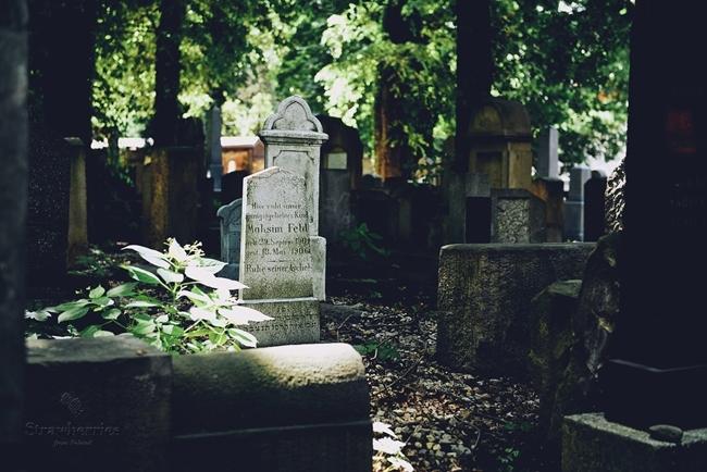 Cmentarz żydowski - stare macewy, spacery i zieleń