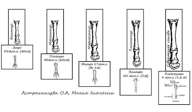 filogeneticheskie-rjady