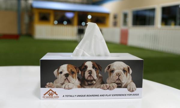 Khám phá resort siêu sang dành riêng cho thú cưng của đại gia tại Dubai