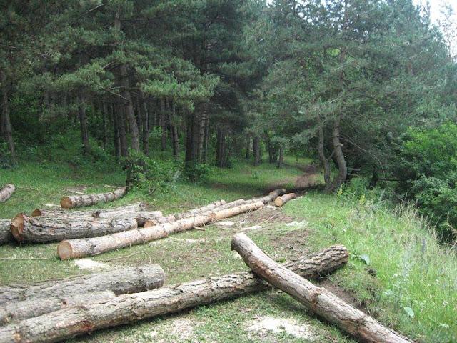 28,000 árboles fueron talados ilegalmente en Armenia