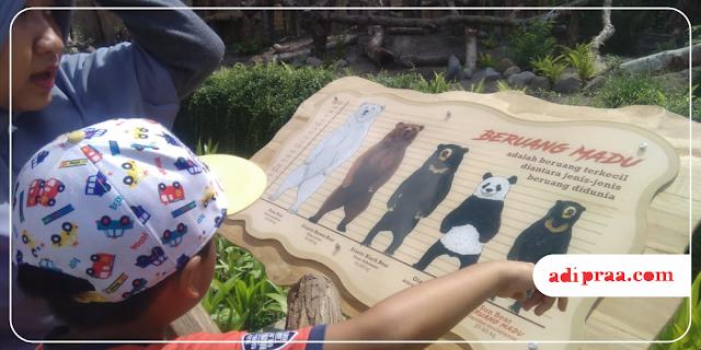 Mengenal jenis-jenis beruang di Gembira Loka Zoo | adipraa.com